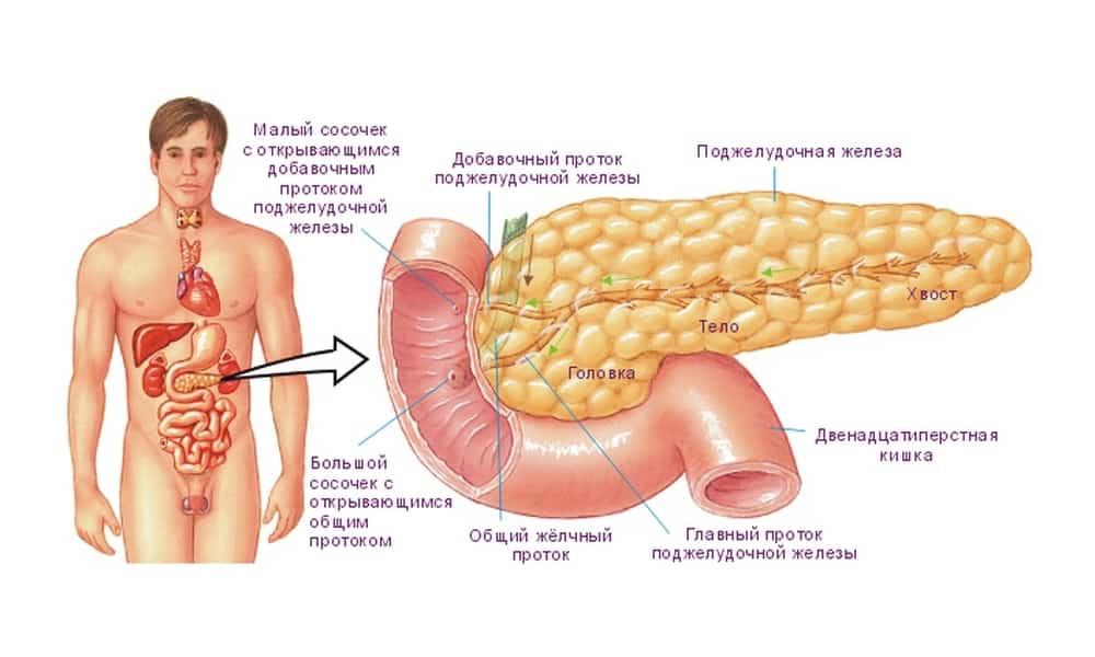 Чем быстро лечить поджелудочную железу в домашних условиях