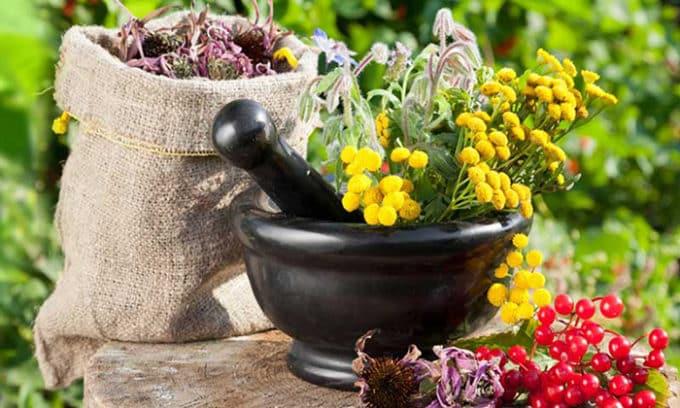 Многие врачи рекомендуют настои лекарственных трав как эффективное профилактическое средство против цистита. Наибольшую пользу приносят подорожник, брусника, ромашка