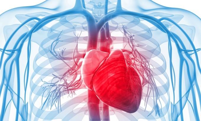 За регулирование давления крови отвечают тиреоидные гормоны