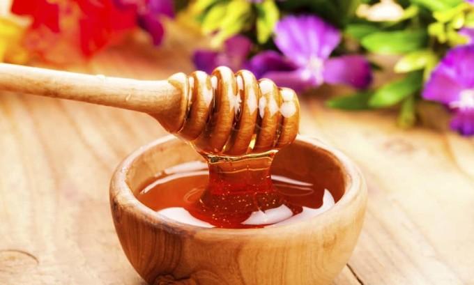 Мед в сочетании с цикорием препятствует развитию панкреатита