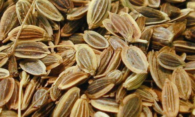 Семена укропа обладают мочегонным эффектом
