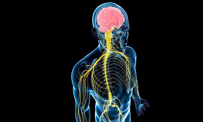Сбои в работе вегетативной нервной системы относятся к числу причин возникновения аденомы щитовидной железы