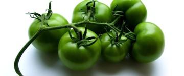 Как от варикоза могут помочь зеленые помидоры?