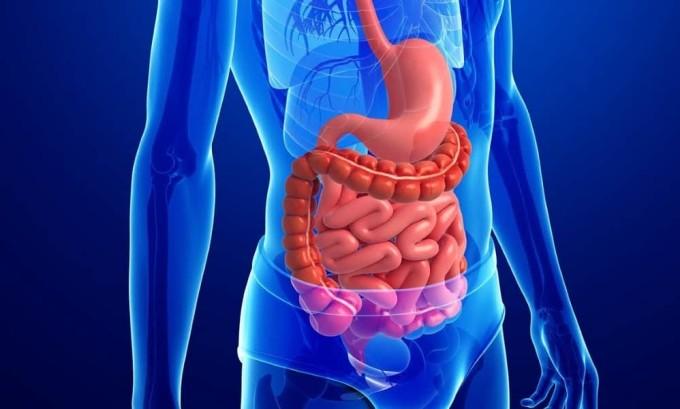 На фоне средней степени тиреотоксикоза наблюдаются частые расстройства работы пищеварительной системы