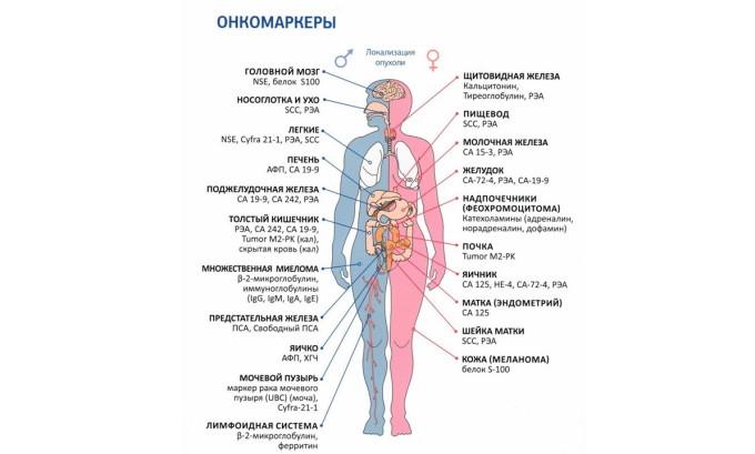 Существует большое количество онкомаркеров, но современная медицина использует только 20 из них