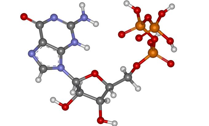 Поджелудочная железа синтезируют белки