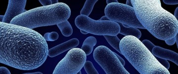 Какие возможные инфекции вызывают цистит?