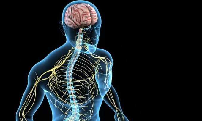 Синдром изменений чувствительности и вегетативных функций является симптомом гипопаратиреоза