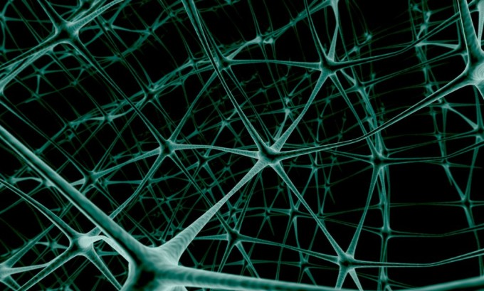 Развитие варикоза связано с нарушениями работы нервной системы