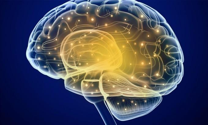 Щитовидная железа напрямую влияет на умственное развитие