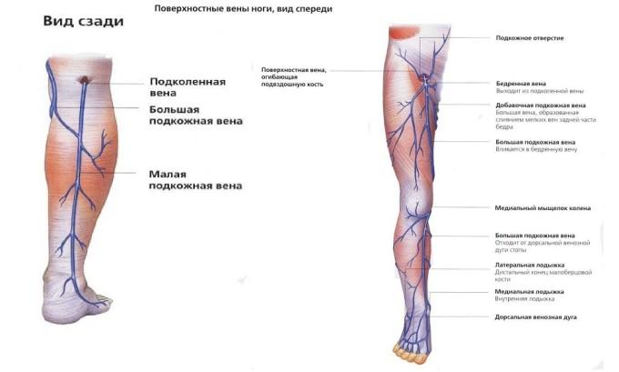 Также причиной варикоза могут стать слишком слабые сосуды, которые находятся в ногах