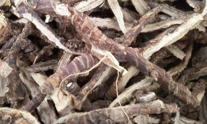 Из корней аира и яблочного уксуса можно приготовить эффективное средство от тромбофлебита