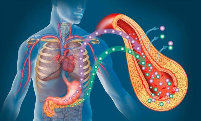 Наличие камня в устье желчного протока закупоривает его, вызывая боль в животе и застой ферментов