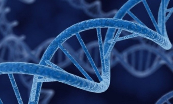 Генетическая предрасположенность - причина возникновения варикоцеле