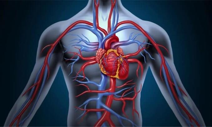 В основе разделения на стадии лежит критерий поражения внутренних органов