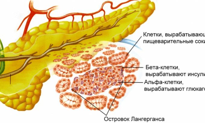 Поджелудочная железа ответственна за выработку инсулина, поэтому реактивный панкреатит может способствовать развитию сахарного диабета