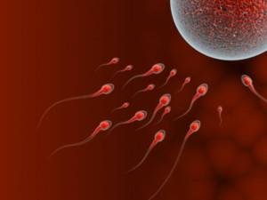 Зачатие ребенка