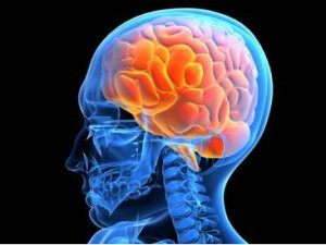 мозг снимок