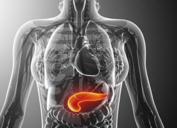 Каковы функции у ферментов поджелудочной железы?