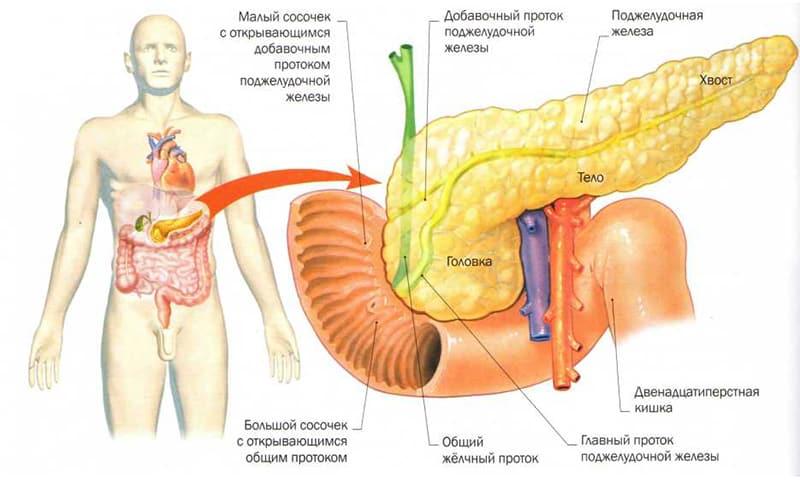 Поджелудочная железа лечение диета физкультура