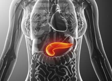Что такое поджелудочная железа: где находится этот орган и какова его функция