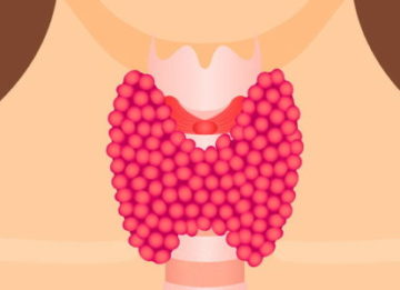 Какие размеры щитовидной железы считаются нормальными?