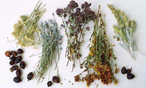 Различные травы широко применяются для лечения различных заболеваний, так как обладают мягким действием и имеют мало побочных эффектов